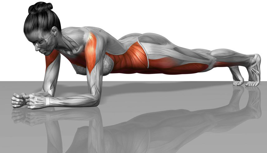 Image result for Planks anatomy